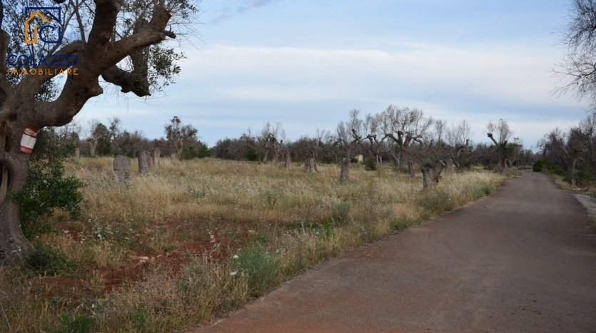Casarano terreno agricolo in vendita