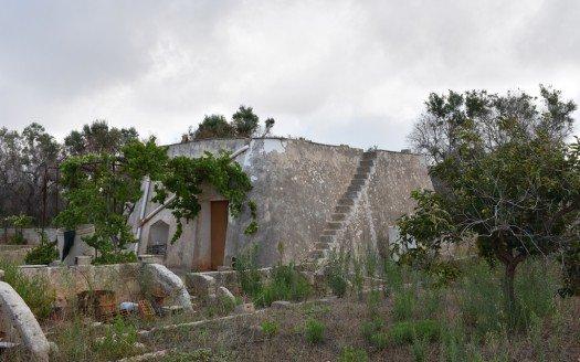 Liama Salentina a Torre Vado al mare
